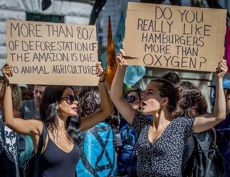 """Protestantes em Londres: """"Você realmente gosta mais de hamburger do que de oxigênio""""  /Foto: Reprodução"""