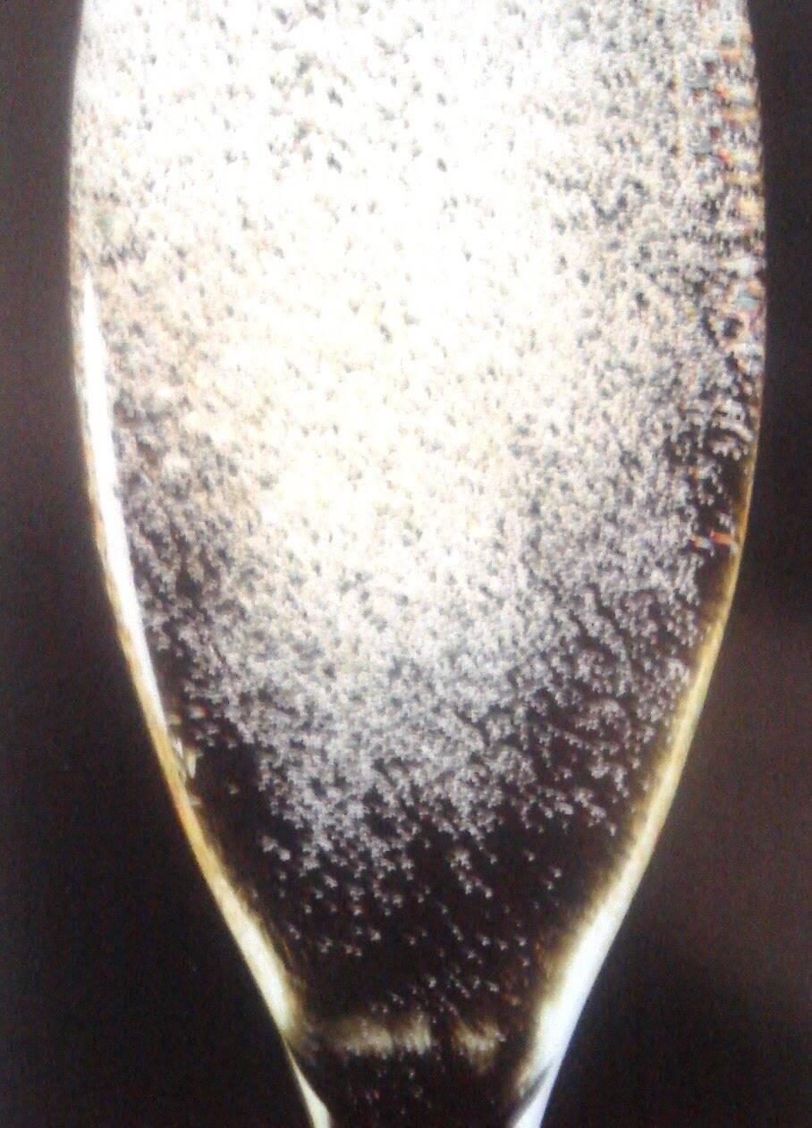 Não ter algumas marcas de champagne tão pedida pelos brasileiros num restaurante tão bacana não pode - pode?