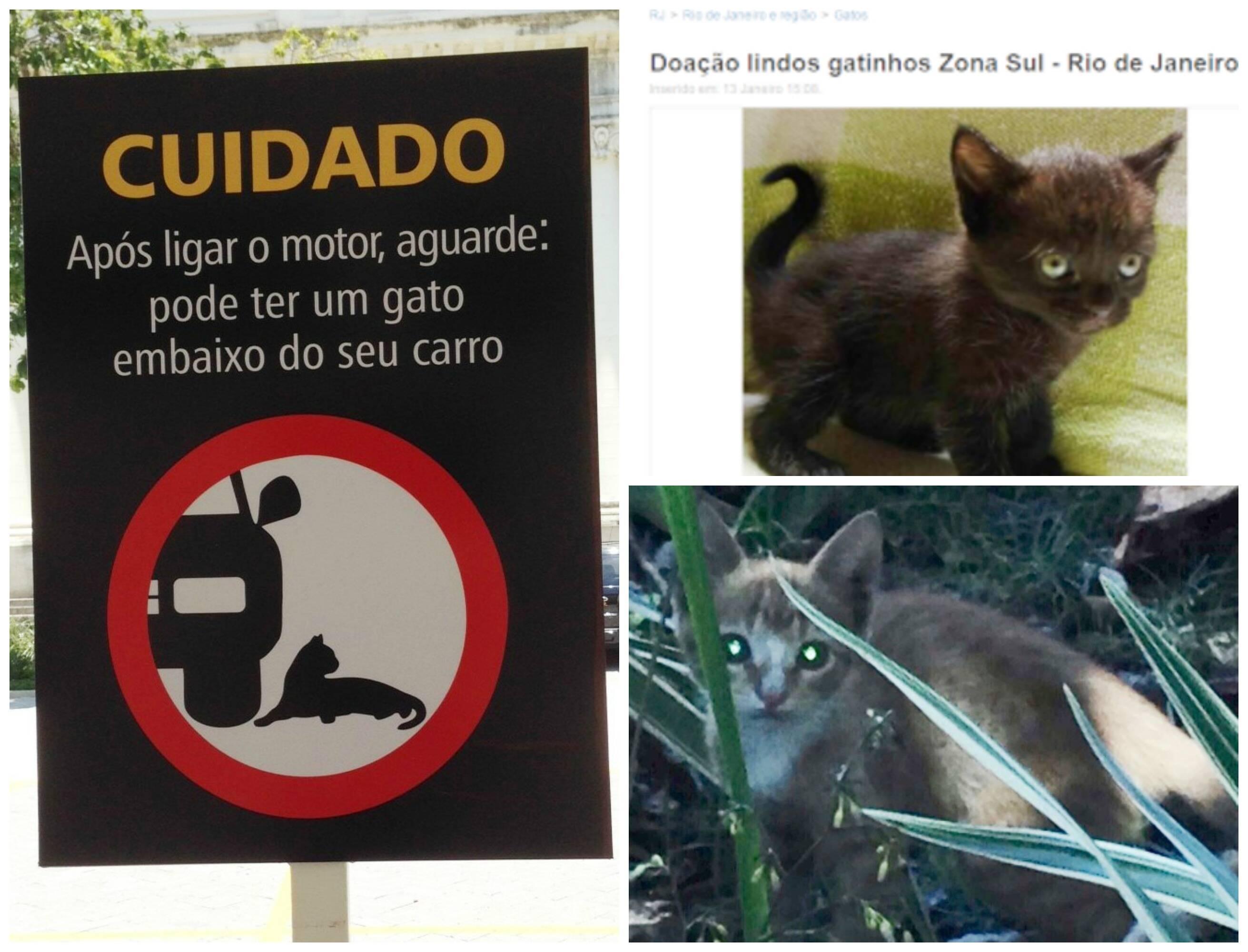 À esquerda, placa no clube visando evitar atropelamentos de gatos: à direita, no alto, anúncio de voluntário oferecendo filhote; abaixo, gatinho abandonado há um mês no clube/ Fotos: divulgação