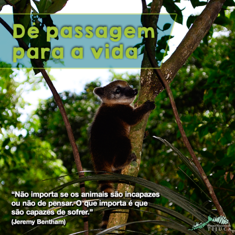 Um dos cartazes da campanha de conscientização sobre o grande número de atropelamentos de animais nas estradas, que vai ser lançada domingo/ Foto: divulgação