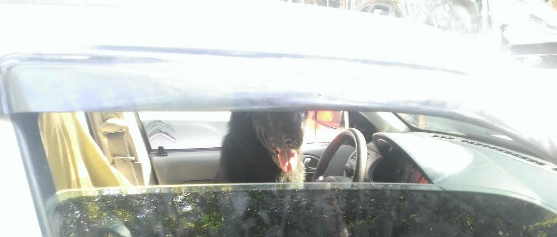 Parque Nacional da Tijuca: dono tranca cachorro em carro e é autuado / Foto: Carmen Florêncio