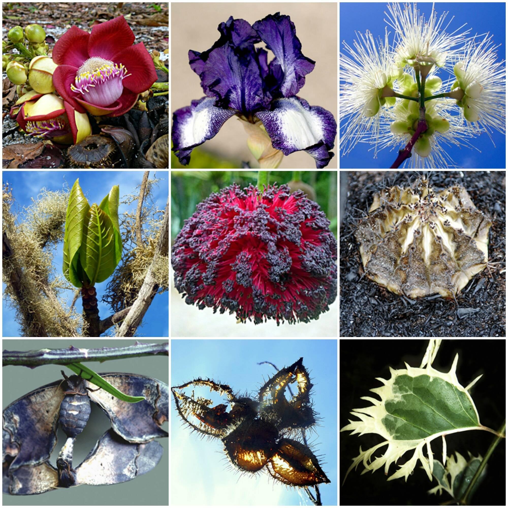 As plantas e flores fotografas por Krajcberg são do seu sítio Natura, em Nova Viçosa, Bahia / Fotos: divulgação