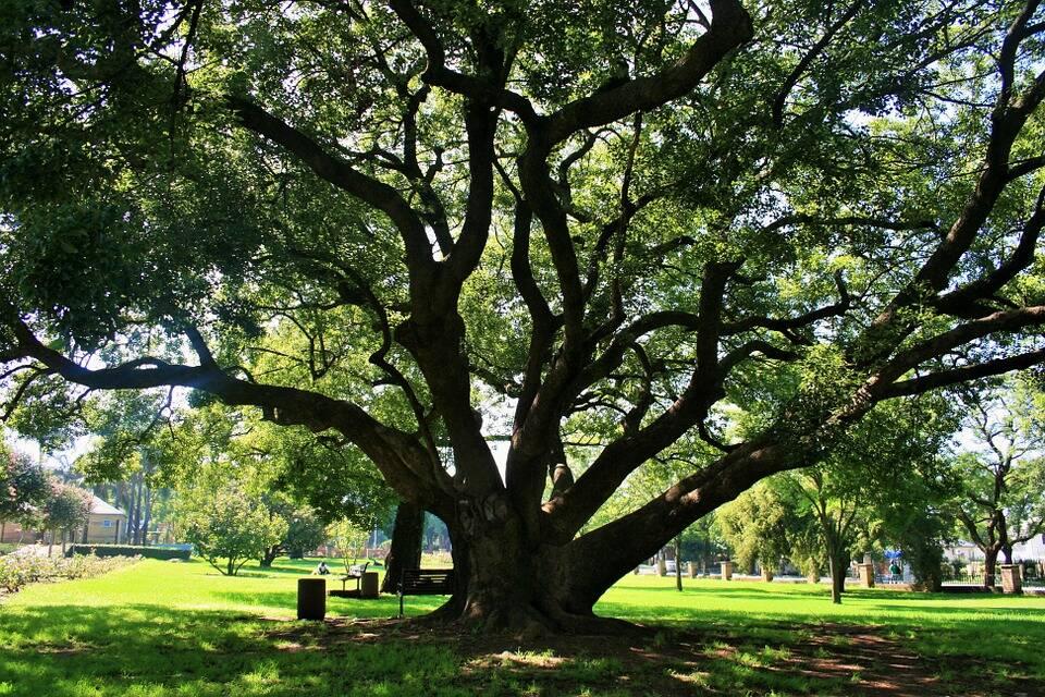 oak-tree-292111_960_720