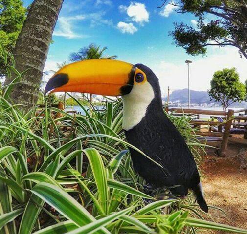 O filhote de tucano que vai chegar ao Palaphita tem nome indígena: Sateré-Mawé / Foto: divulgação