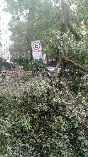 Árvore caída na esquina da Xavier da Silveira e Miguel Lemos, em Copacabana, em razão da chuva com rajadas de ventos fortes nesta terça-feira (10/01) / Foto: Vinicius Cavalcante