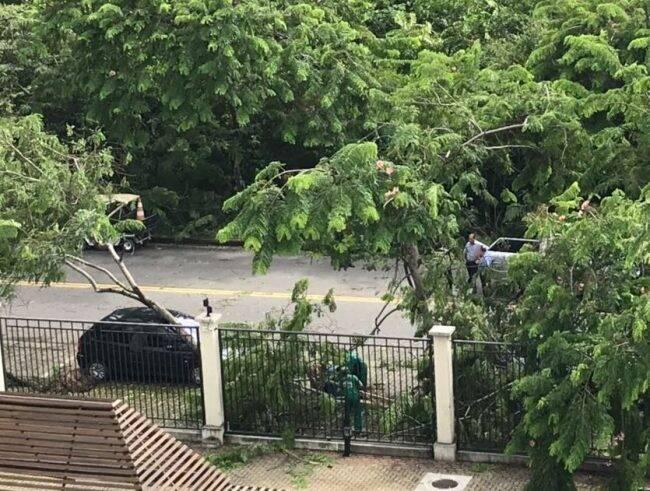 Condomínio Península: carros são atingidos por árvores e seguranças bloqueiam as ruas /Fotos: Arquivo Pessoal