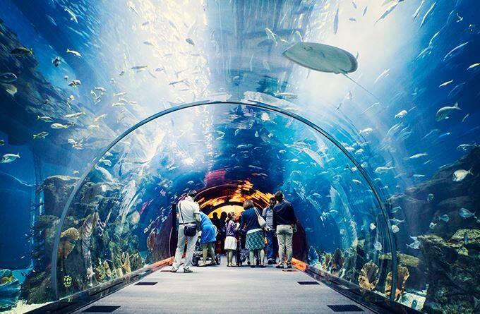 aquario-a
