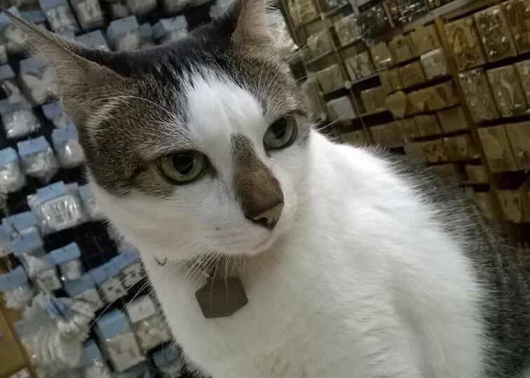 rubinho-gato-c